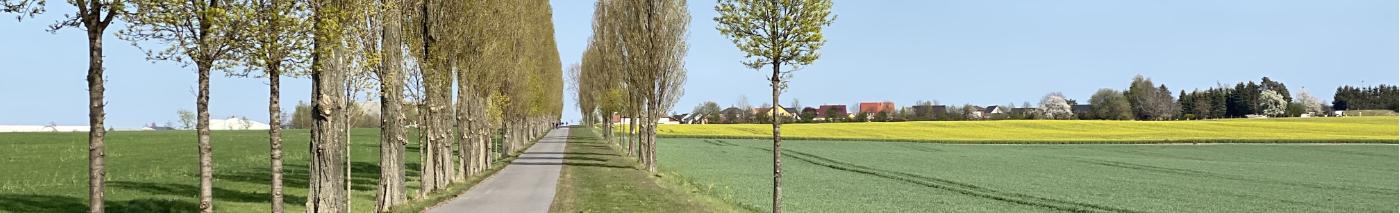Kesselsdorf-Pano-1